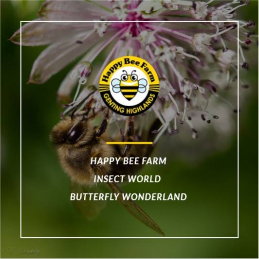 Happy Bee Farm, Insect World & Butterfly Wonderland